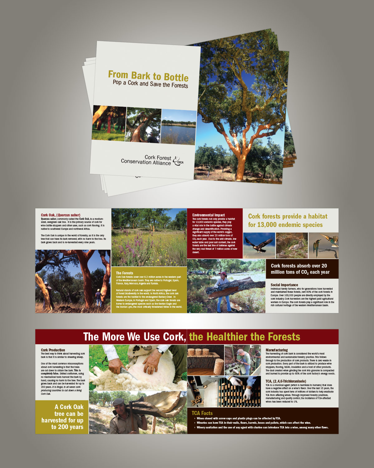 CFCA Promotional Brochure (Graphic Design)